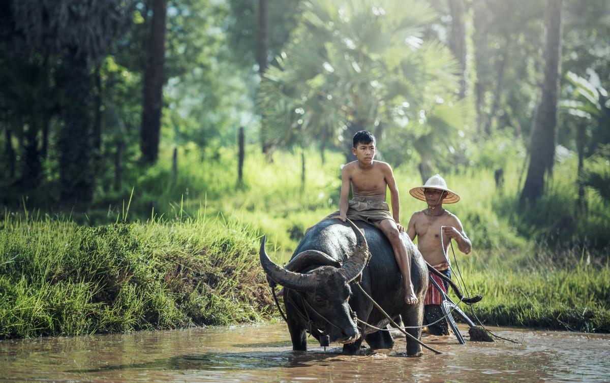 Circuit de 10 jours au Cambodge